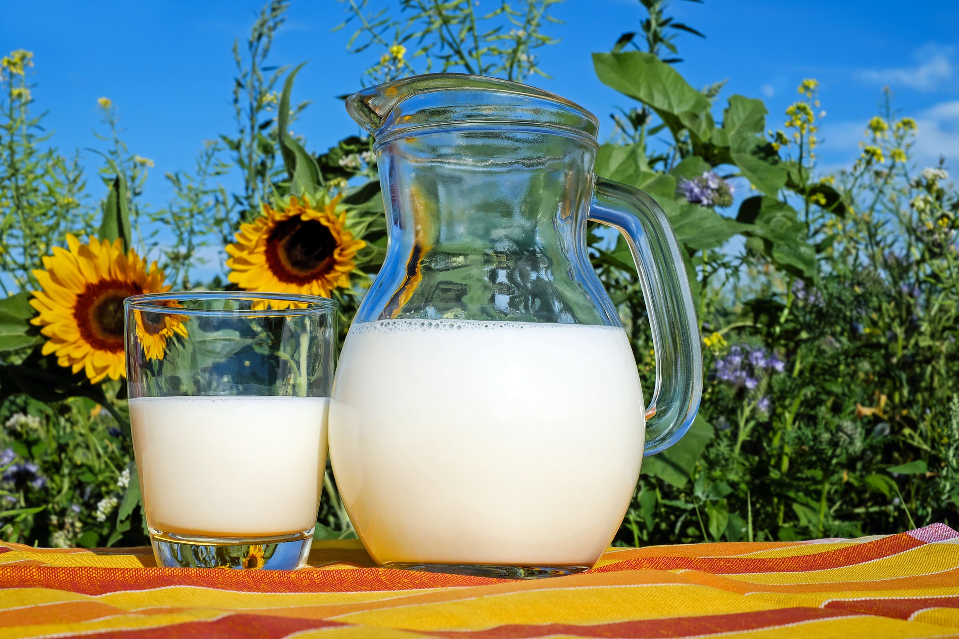 a jar and cup of milk in a sunflower field